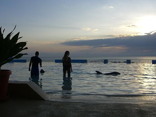Marineland of Florida Dolphins St Augustine