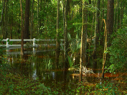 Fay frontyard swamp picture