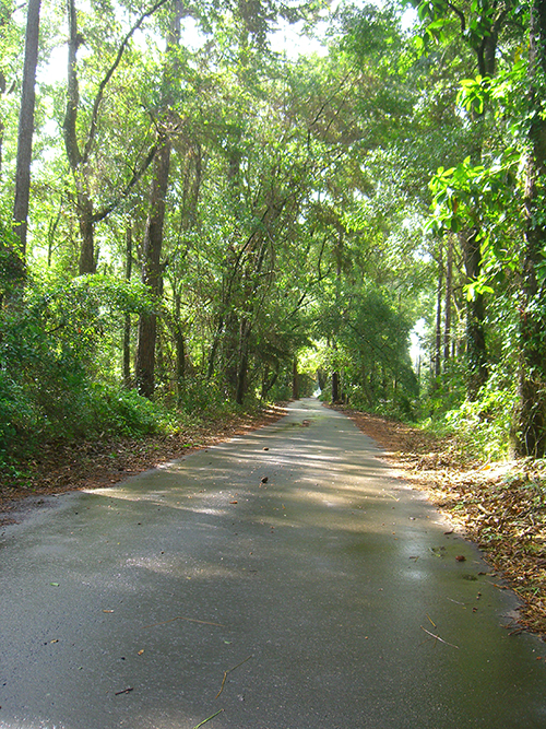 Carter Rd. St. Augustine Florida nature picture