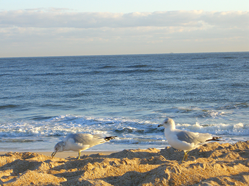 Picture of Seagull Birds on Beach and Waves