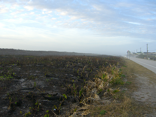 Picture of Control Burn Aftermath on A1A