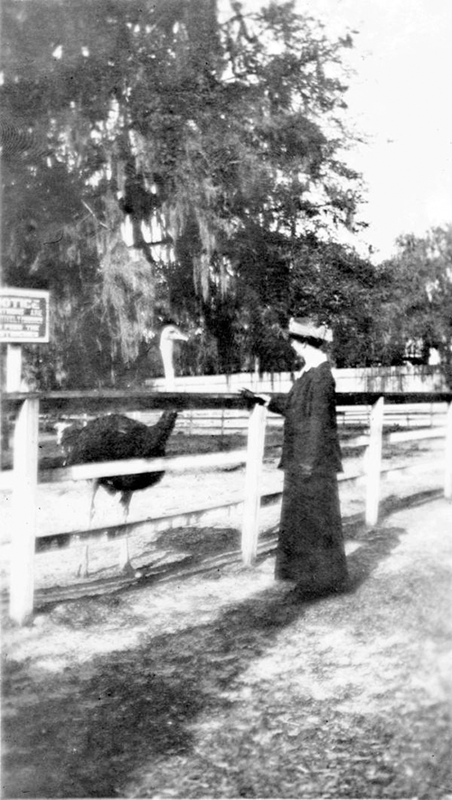 Christine Atwell and Ostrich historic photo