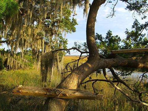Marsh Tree Perch Photo