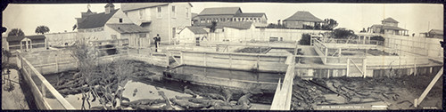 Photo St. Augustine Alligator Farm in 1910