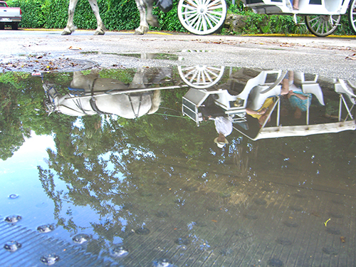 Horse Carriage Puddle Picture