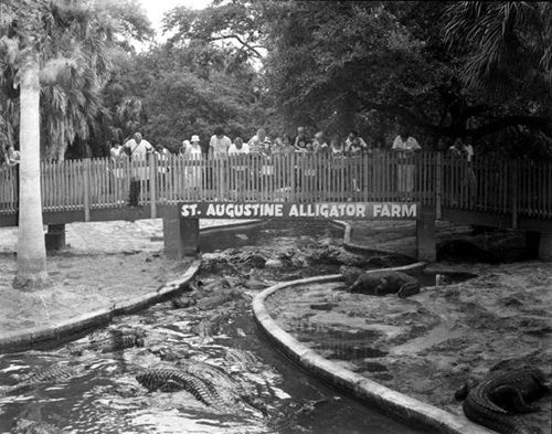 Alligator Farm Bridge Picture