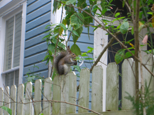Blurry Squirrel! Picture
