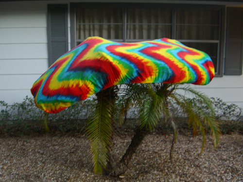 Reggae Palm Anti-Freeze Picture