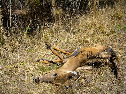 Oh Deer Pic