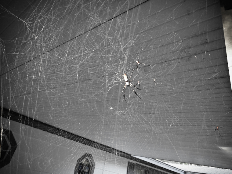Carport Spider Picture