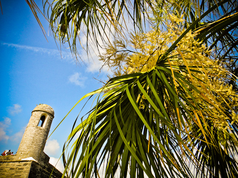 Fort Palm Fronds Photo St Augustine Florida