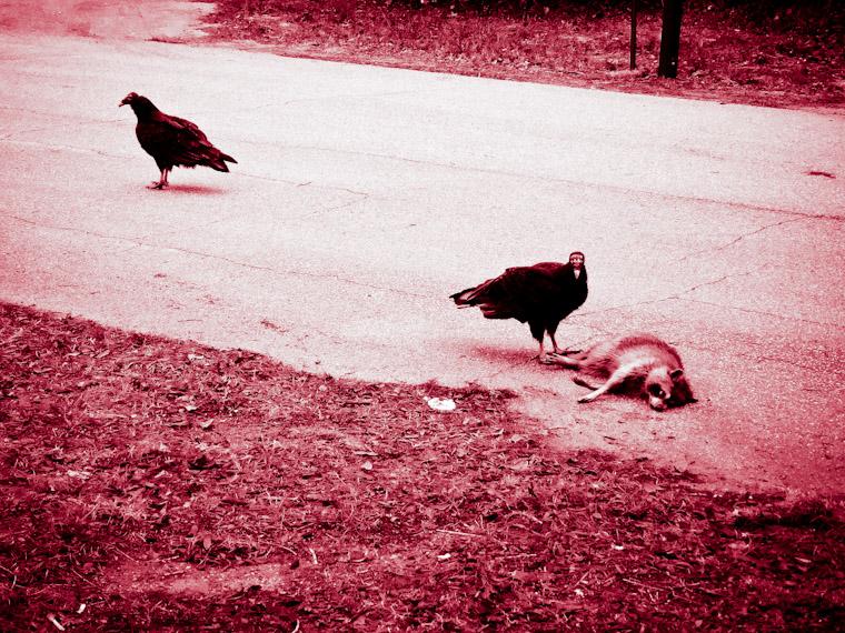Picture of Vulture Crime Scene St Augustine Florida