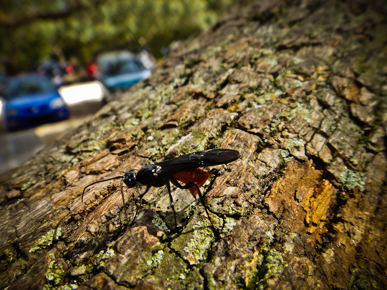 Cool Bug in Tree Photo St Augustine Florida