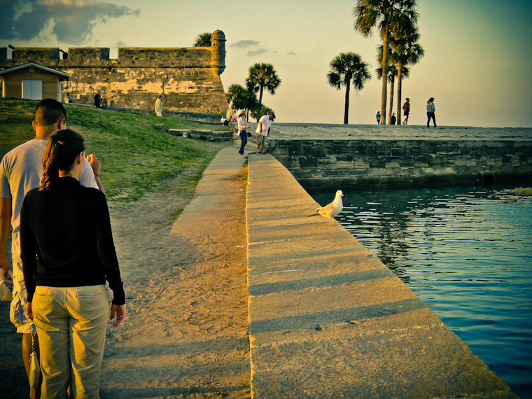 Photos of Tourist Vs Bird in St Augustine Florida