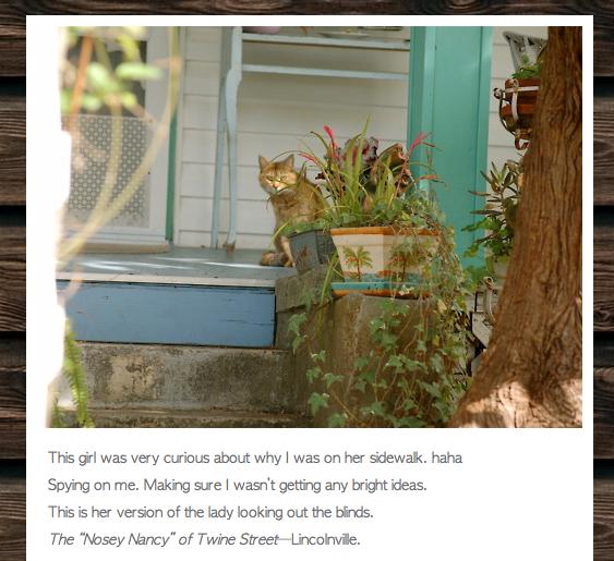 Lincolnville Cats Screen Capture