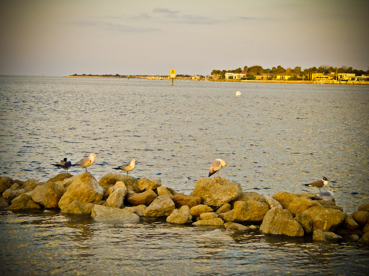 Pictures of Rocky Sunset Birds in St Augustine Florida