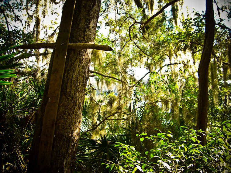Photo of Cross in the woods in st augustine florida