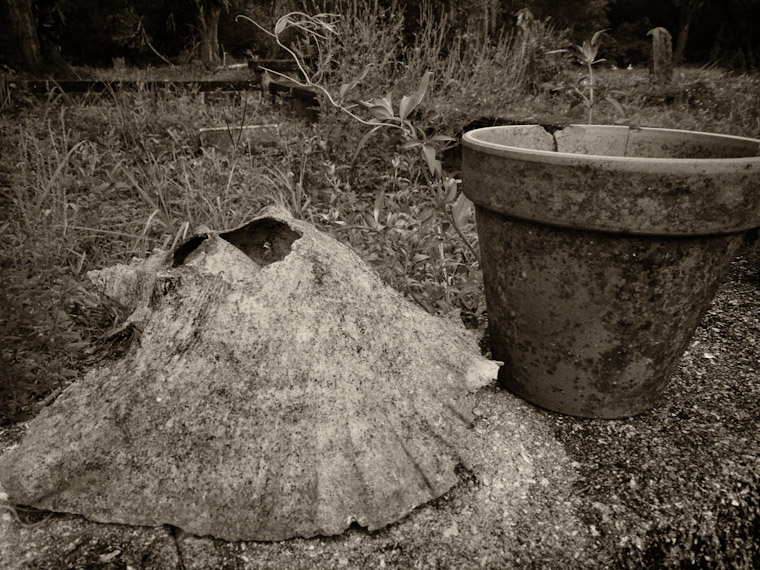 Graveyard Shell Pot Photo in St Augustine Florida