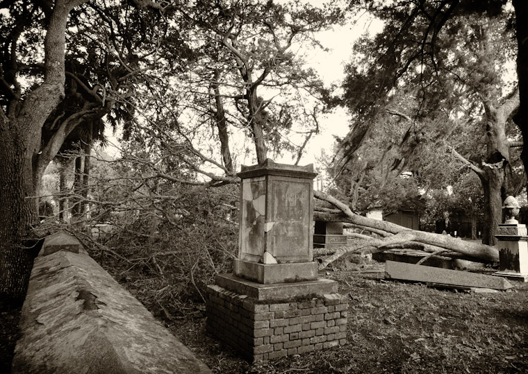 Picture of Fallen Tree in huguenot cemetery in St Augustine Florida