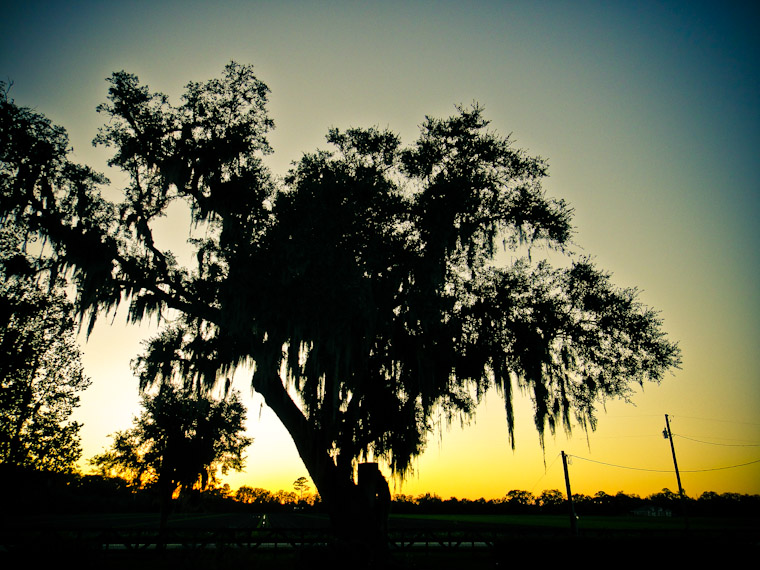 Photo of equestrian center tree in Hastings Florida