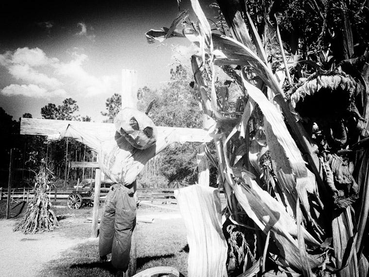 Pinhole photo of Crucified pumpkin man at Florida Agricultural Museum