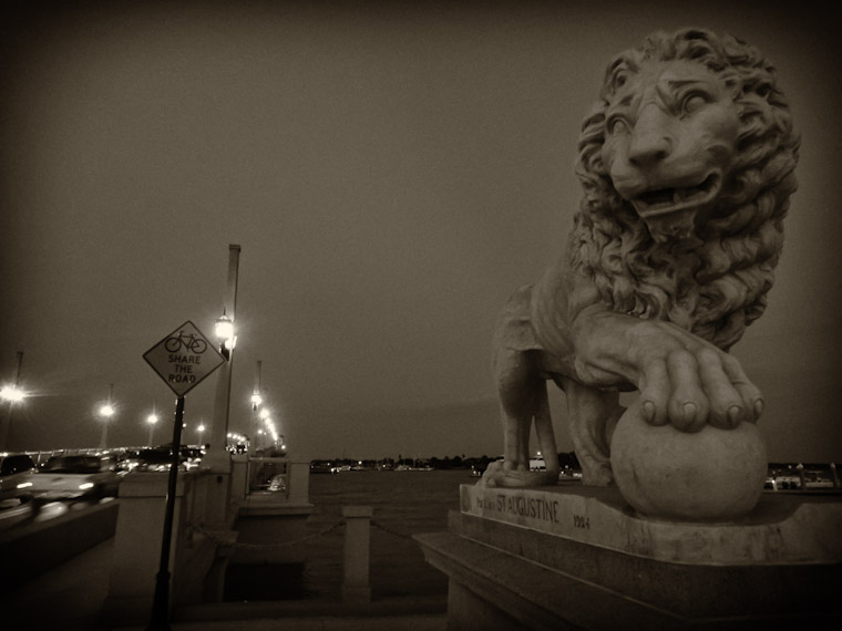Photos of Lions Sharing the Road in St Augustine Florida