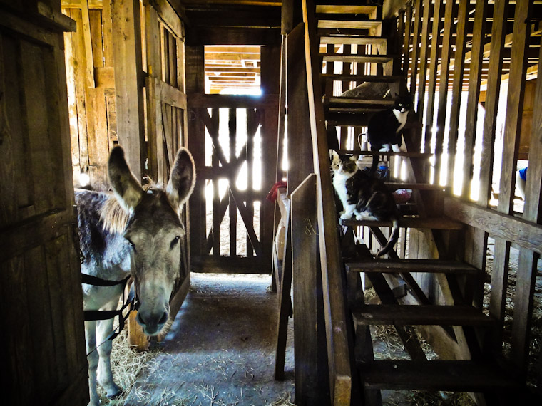 Picture of Barnyard buddies in Flagler County Florida