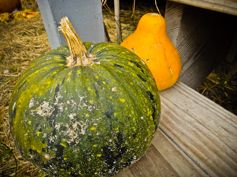 Photo of a pumpkin and gourd on step in Flagler County Florida