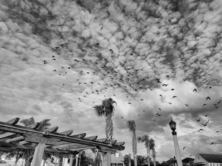 St Augustine Florida birds fly in marbleized sky