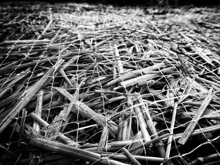 Photo of a hay mat in St Augustine Florida