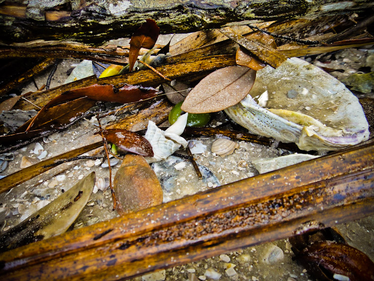 Washed up stil life photo in Saint Augustine Florida