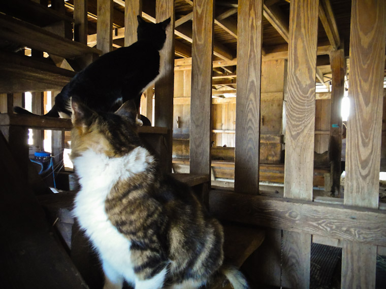 Picture of farm cat backs in Saint Augustine Florida