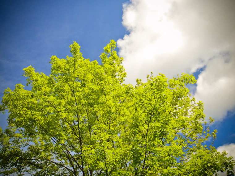 Photo of spring tree leaves in St Johns County