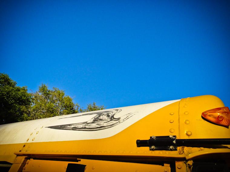 Photo of school bus bird in St Augustine Florida