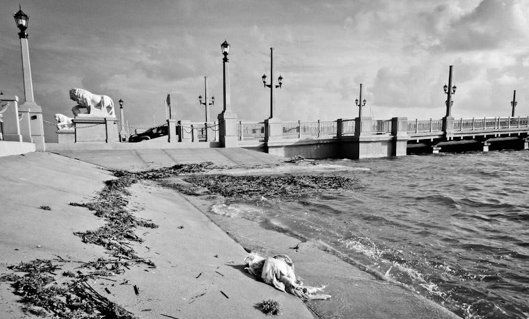 Photo of debris washed up at Bridge of Lions in St Augustine Florida