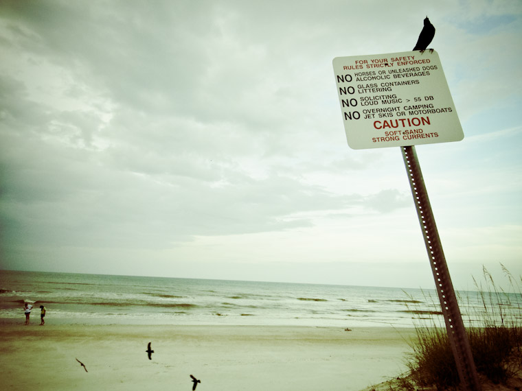 Avian beach rule patrol in Saint Augustine Florida