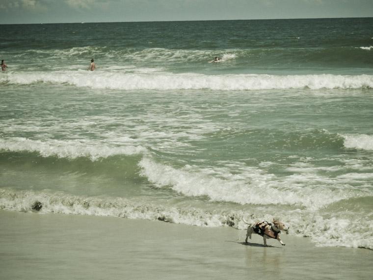 Dog Patrol in Saint Augustine Florida