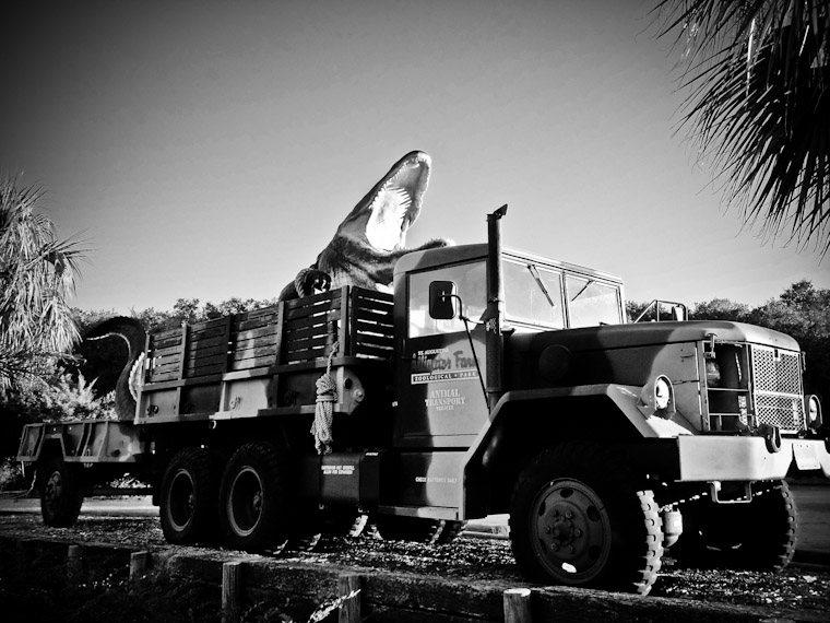 Alligator Farm Animal Transport Truck photo in Saint Augustine Florida