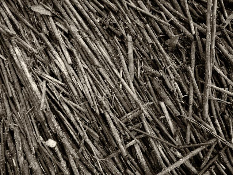Reed Mat Photo