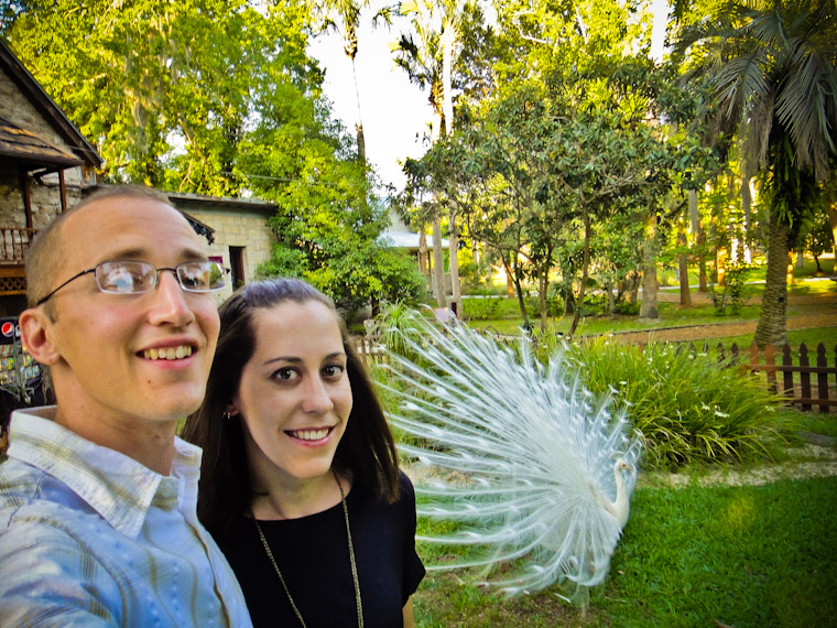 Wife and I with a feathered albino white peacock friend