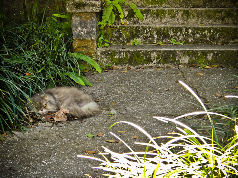 Saragossa Street Wilford Brimley Cat
