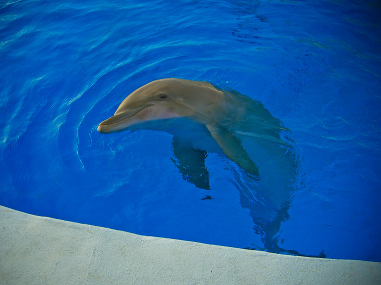 Picture of Nellie the dolphin at Marineland