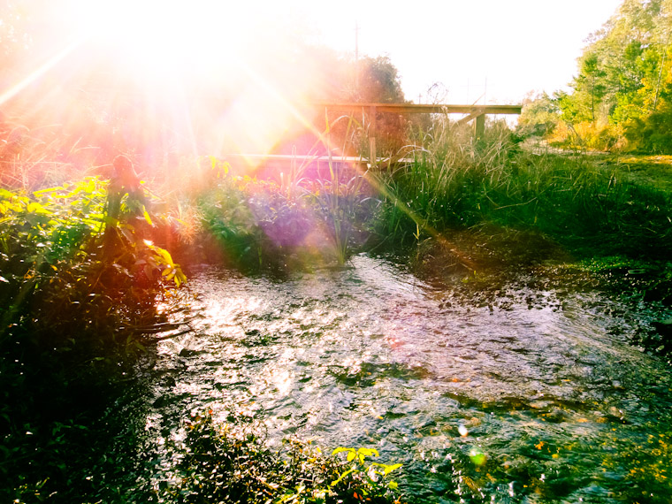 Picture of morning rays of sunshine at Moses Creek