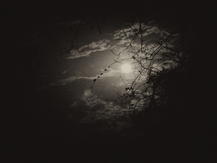 Photo of moon light through trees