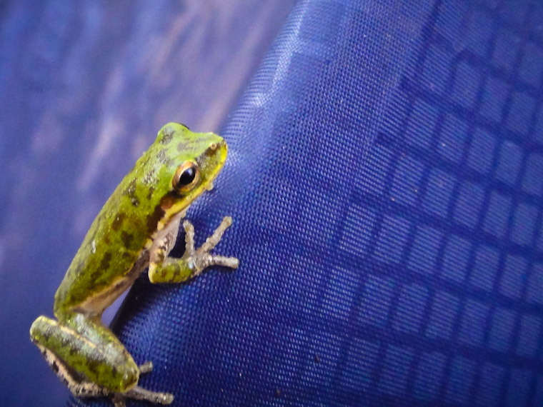Picture of frog on camping tent
