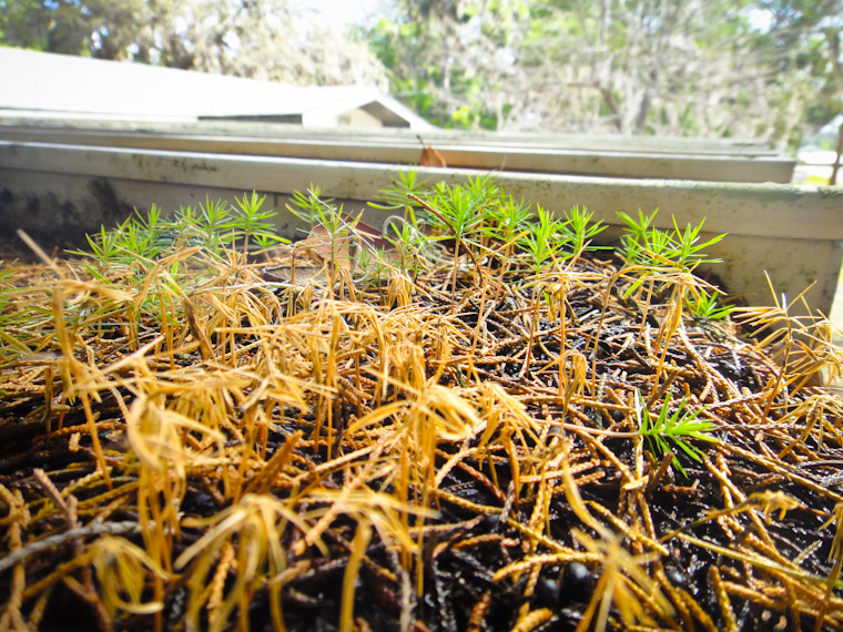 Picture of small trees growing on carport