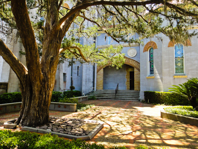 Picture of live oak at memorial presbyterian church