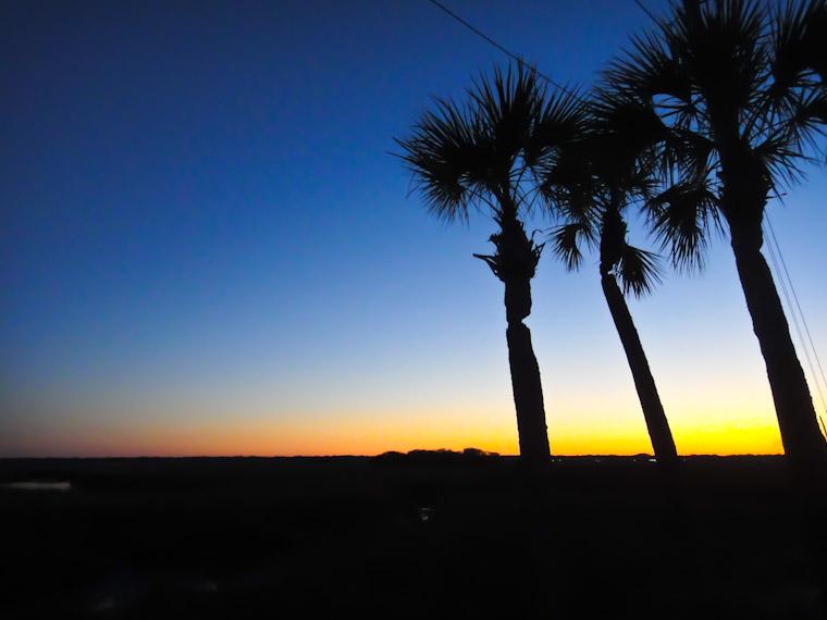 Sunset silhouette palms