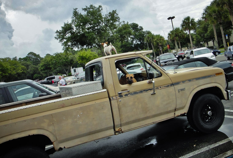 Ford F150 Guard Dogs at Publix