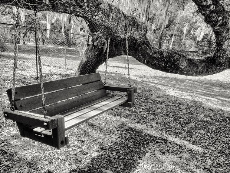 Beautiful live oak tree bench swing